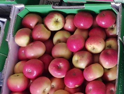 Picture of APPLE FUJI Organic