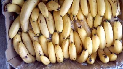 banana-cavendish-organic-ripe