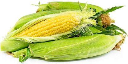 corn-cob-organic